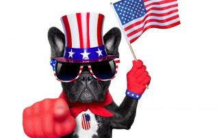 political dog