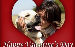veterinary e-news magazine february 2017