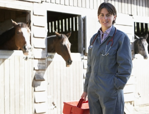 Equine Vet Techs-Great Practitioner Partners-Part 1