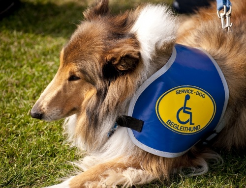 International Assistance Dog Week–August 6-12