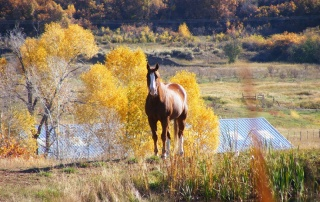 fall horse