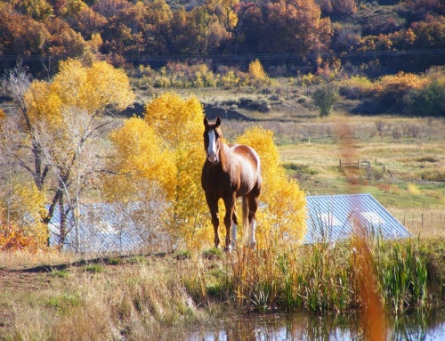Protect Your Horse From Autumn Health Hazards