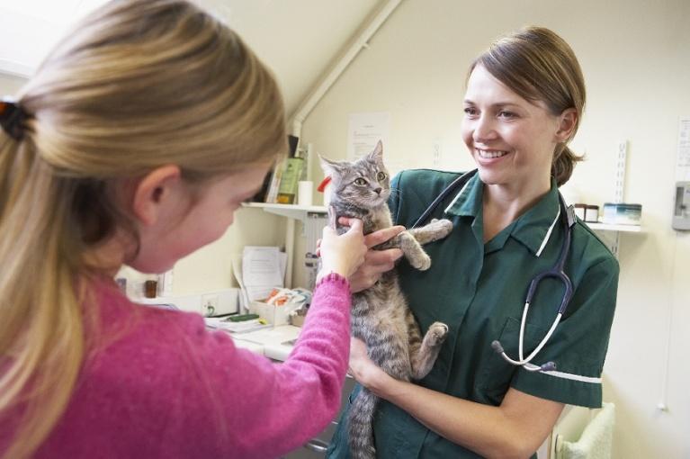 vet nurse