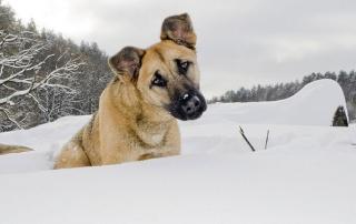 december veterinary enews magazine