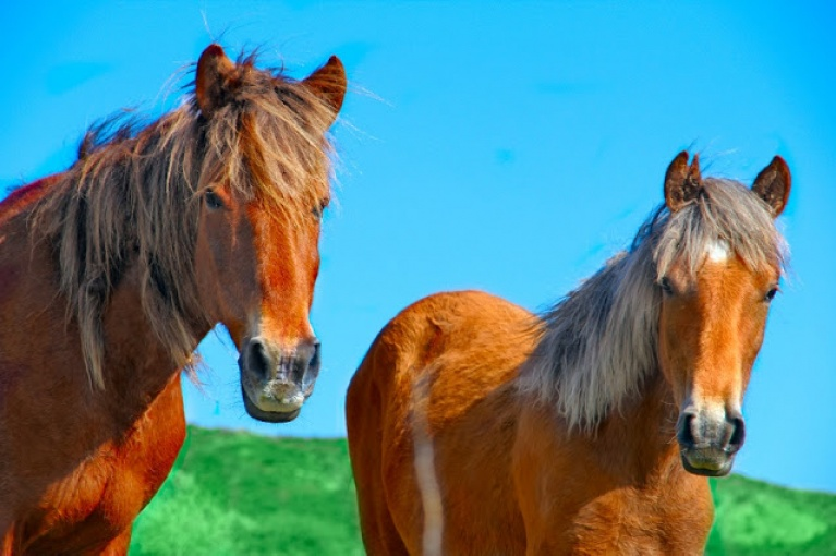 Weird Facts About Horses Horse And Lion Photos