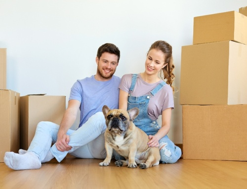 Stress-Free Moving—Pet Style