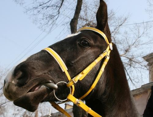 Breaking the Code of Equine Head Tossing