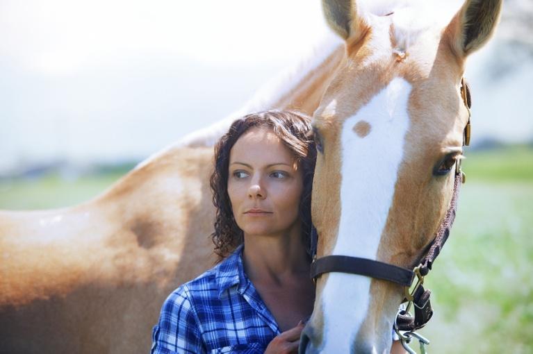 horse care in heat